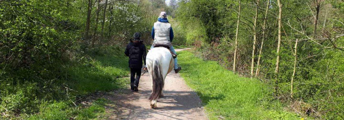 pferdebild-titel-3